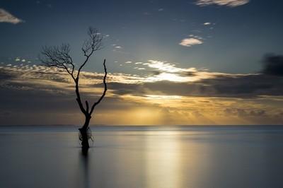 That Tree at Sunrise