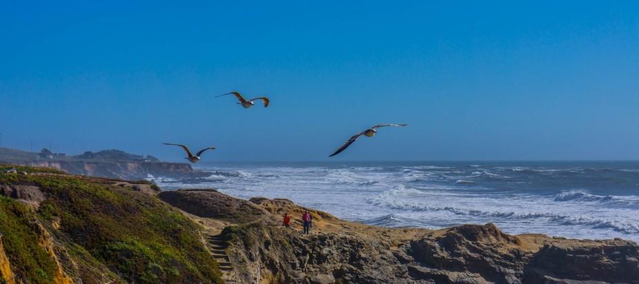 Three Seaguls