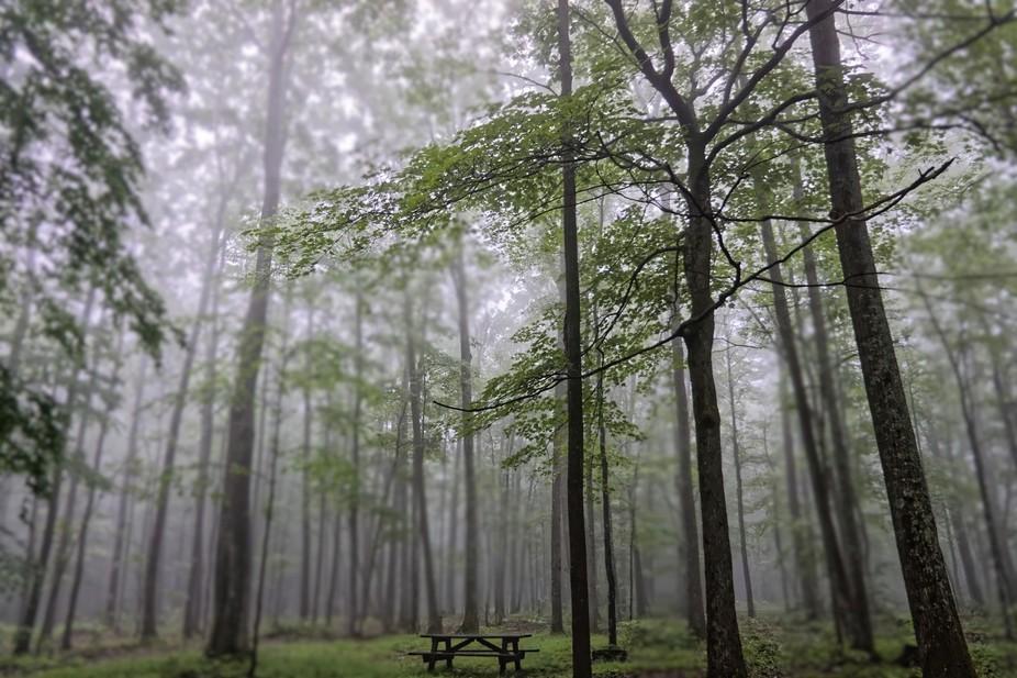 Fog at Tracy Ridge, ANF