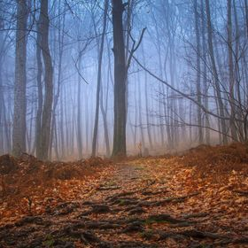 This image was taken as I was hiking up a moderately difficult trail at the Delaware Water Gap in New Jersey. The morning was foggy and a bit wet...