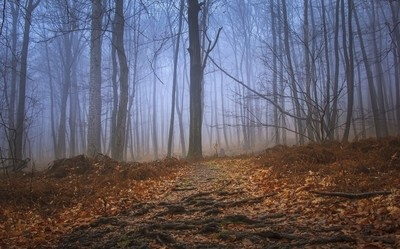 Foggy Morning Forest Hike