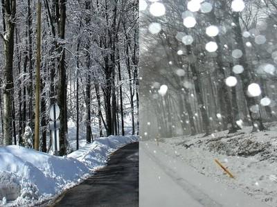 Winter Faces