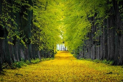 A Road to Your Inner Peace