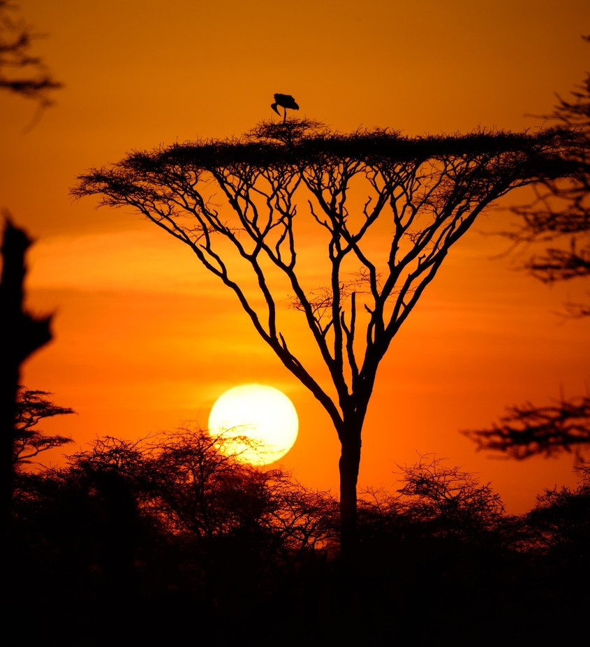 Serengeti Sunset by ron7cal - Silhouettes Of Trees Photo Contest