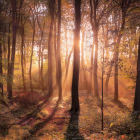 Morning light in beech woodlands of Oxfordshire on an autumn morning