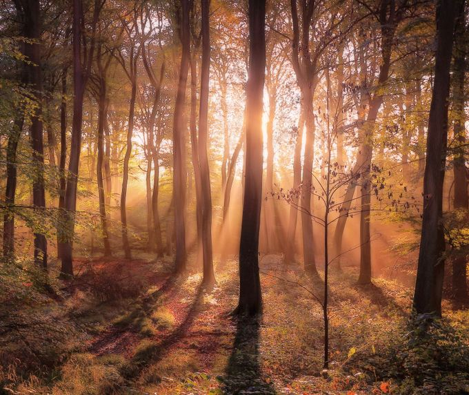 Golden Light by ceridjones - Divine Forests Photo Contest