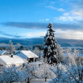 On Vancouver Island in British Columbia in a small city called Duncan after a heavy snowfall.  All clung to the trees making a pristine peaceful ...