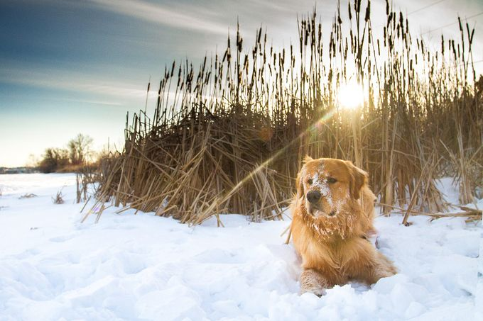 snow dog by elecfoto - Pets With Character Photo Contest