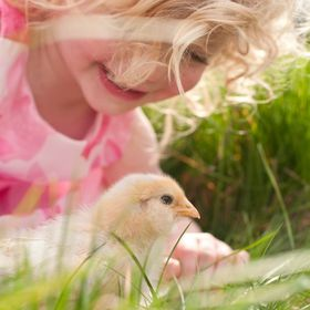 Little darling, curious girls with golden curls, green grass, and baby chickens. It's hard to beat the afternoon light shining on these perf...