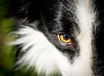I Keep My Eye On You