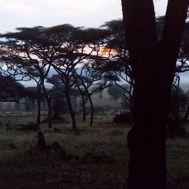 Baobab Trees at Dusk