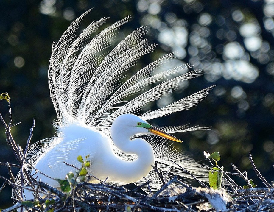 Breezy Egret