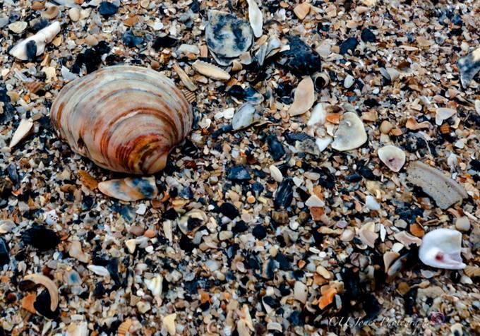 Botney Bay, Edisto Beach, South Carolina
