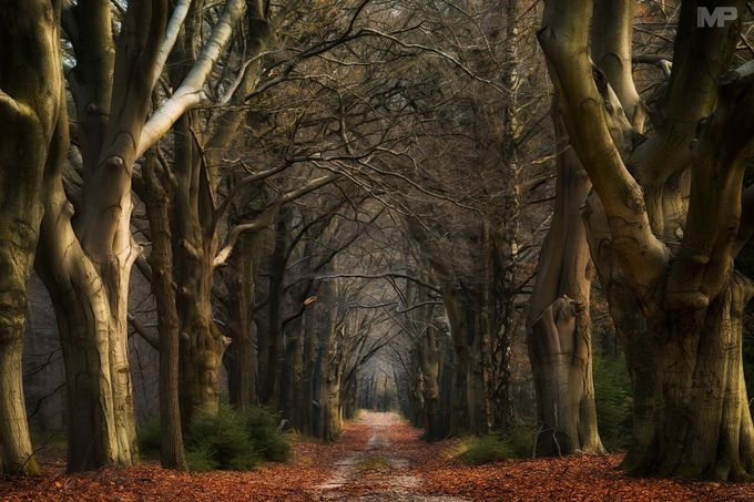 The Old Lane by martinpodt - Divine Forests Photo Contest