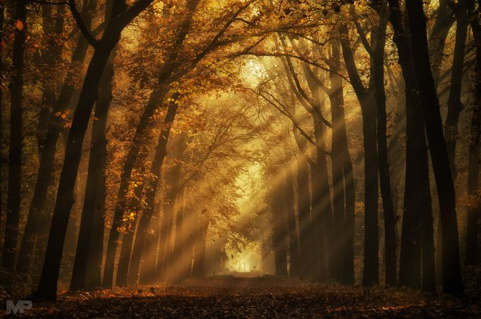 You can't have a light without a dark by martinpodt - Playing With Light Photo Contest