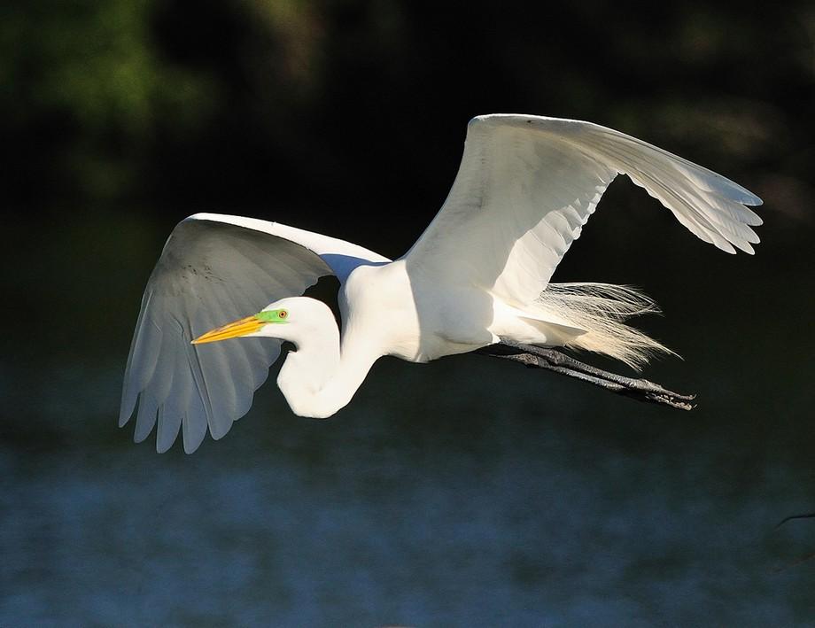 Taken at Wakodahatchee Wetlands Park in Delray, Florida. Unbelievable photo ops!