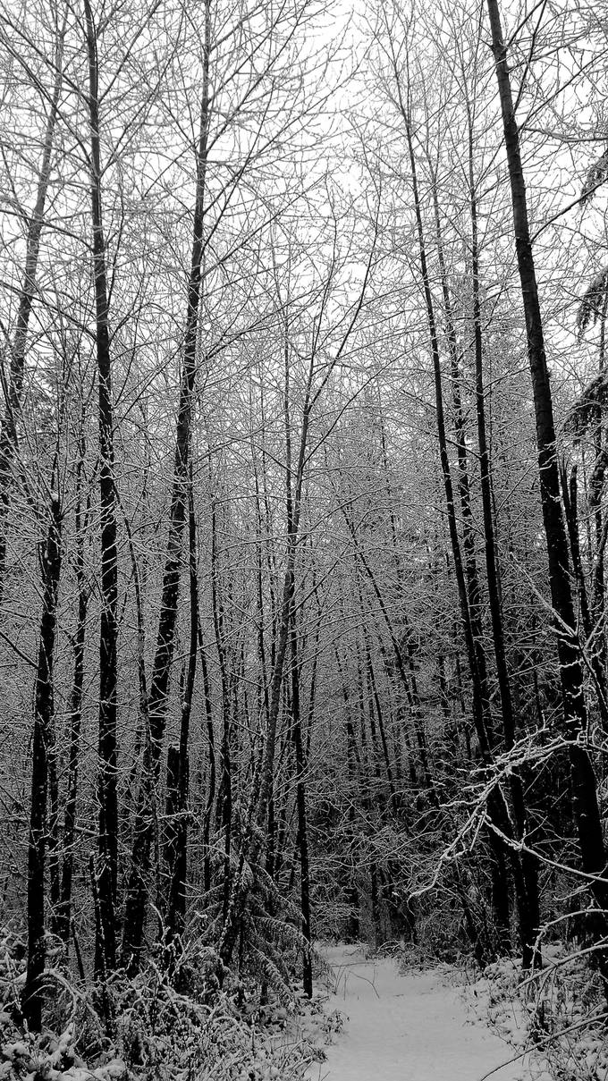Nothing so pretty as a forest with crystal icing!