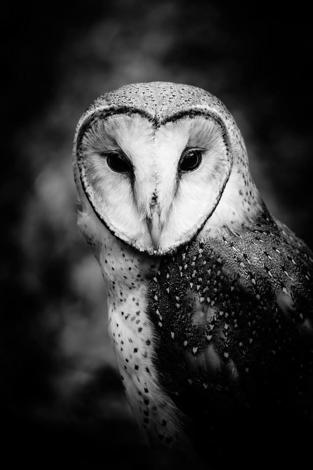 Animal Faces In Black And White Photo Contest Winners Viewbugcom
