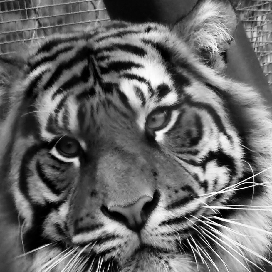 Post processing on the tiger,