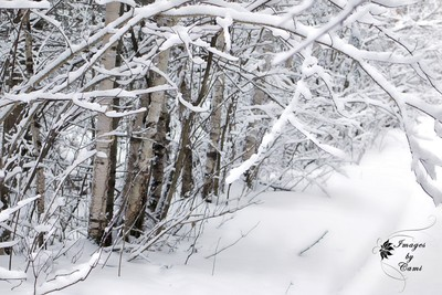 Snow Blanket 2