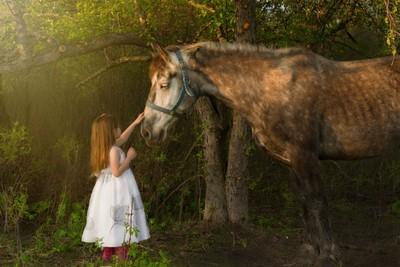 Violet's Horse