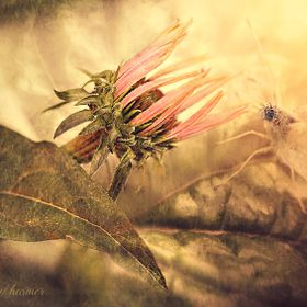 This composition is the merging of 3 images, the use of a few Textures and light overlays. I love Butterflies - something a bit magical about the...