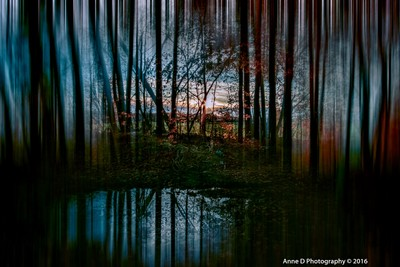 manipulated forest
