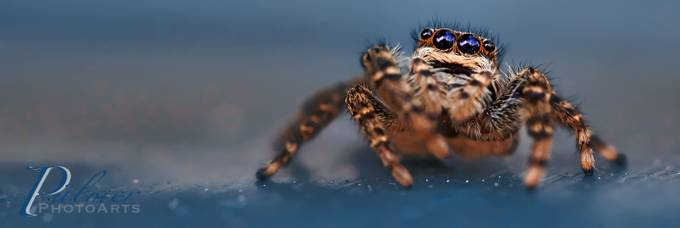 Little Spider by SusePhotoArts - Isolated Photo Contest