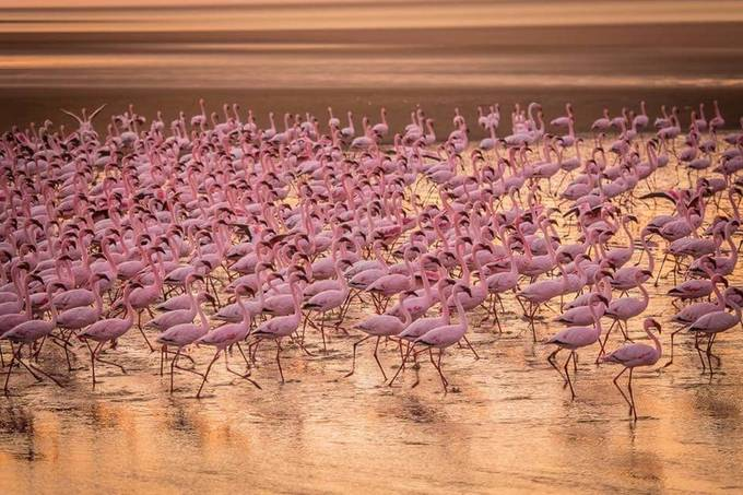 FLAMINGOS by FrancoisHorne - More Of The Same Photo Contest