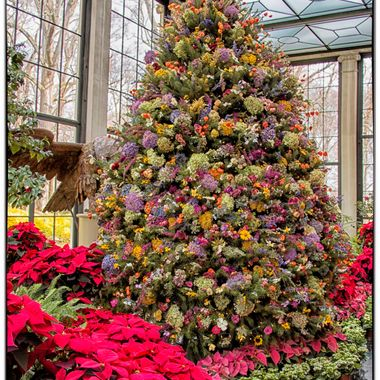 All the flowers on this tree are dried by employees and volunteers at Winterthur. Nature's beauty tree!