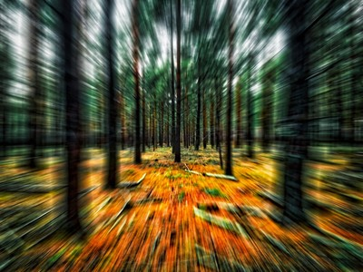 Creative edit from a forest image