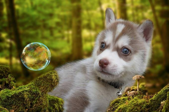 Puppy Adventures by TammyCook - Kittens vs Puppies Photo Contest