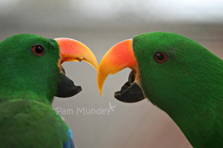 So happy with this photo, parrots were so hard to get photos of!
