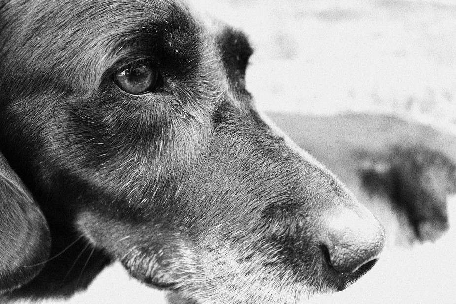 Dog in b and w