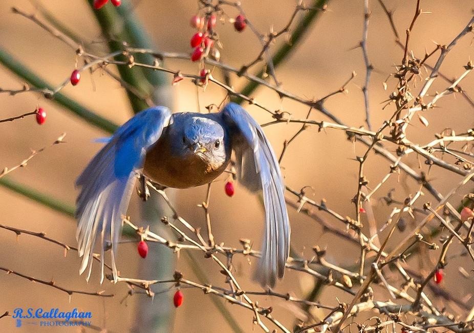 Bluebird Coming Your Way