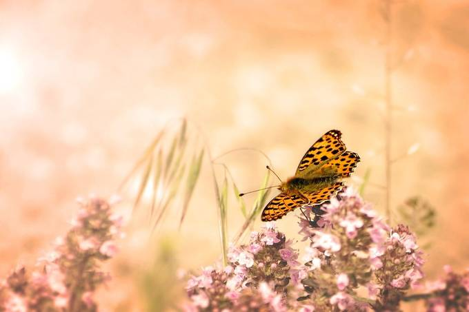 Taking a break by cameliasopon - Beautiful Butterflies Photo Contest