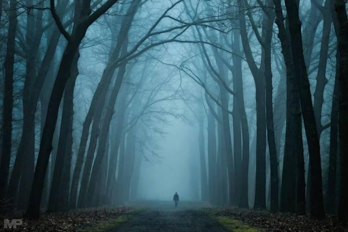 Dark Magic by martinpodt - A Walk In The Mist Photo Contest