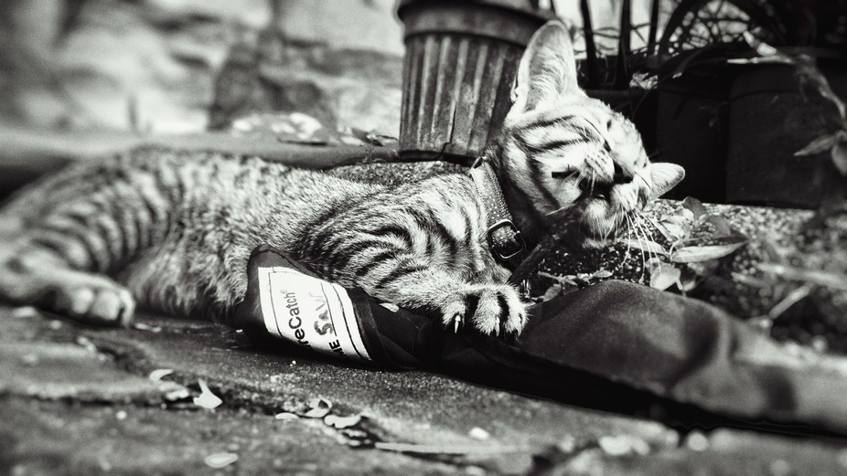 This cat was found outside alone finding something to do. So I decided to be that something and w...