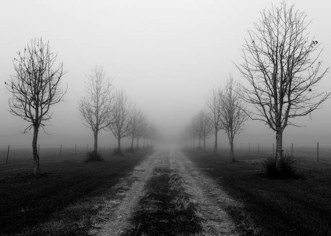 Follow the Trees by Kirbsta - Mist And Drizzle Photo Contest