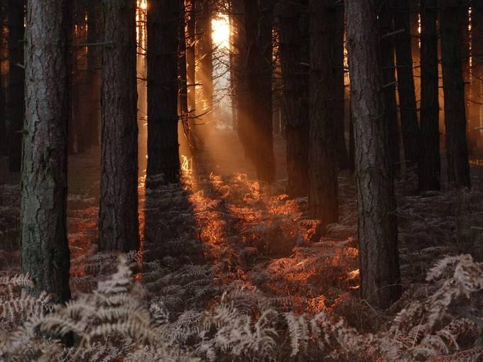 Dunwich woods by Carl65 - Freshmen 2016 Photo Contest Vol 2