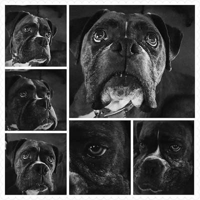 Lola ❤❤