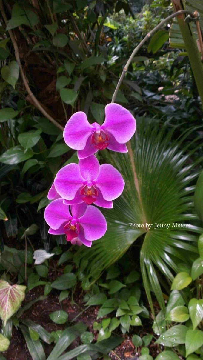 purple orchid cluster