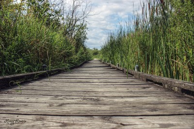 Beyond the Boardwalk