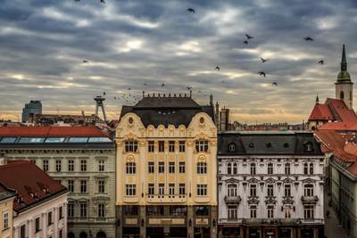 Birds Flying over Bratislava in Slovokia