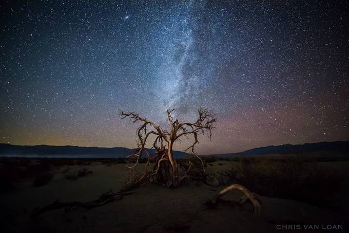 Death Tree by ChrisVanLoan - Our World At Night Photo Contest