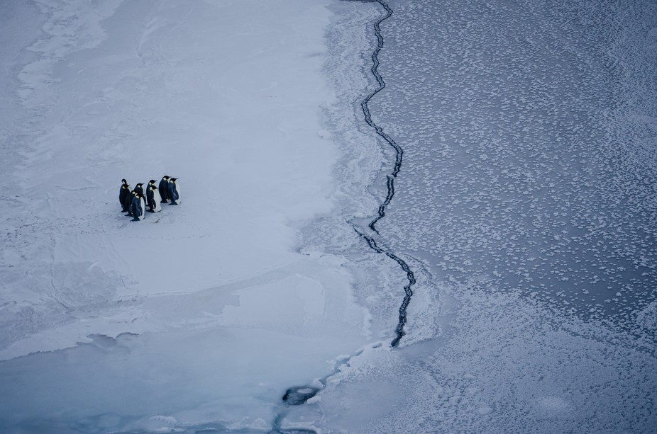 Penguins near the ice edge