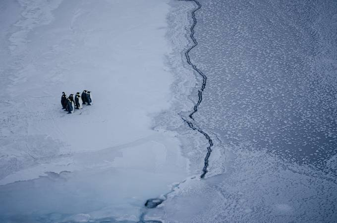 Penguins near the ice edge by kiramorris - Stunning POV Photo Contest