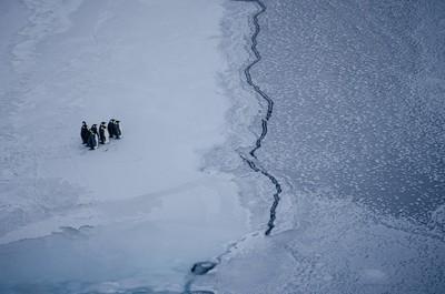 Penguins near the ice edge