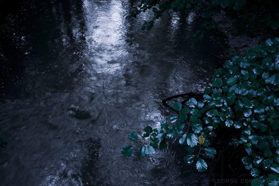 Early rainy morning in a forest. Forest stream in the summer.
