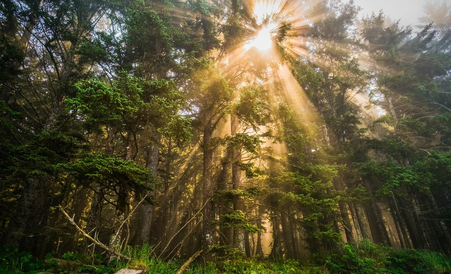 The rays were just insane on this hiking day on the NCT. I couldn't get enough of them a...